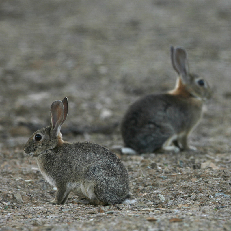 Día de Conejos